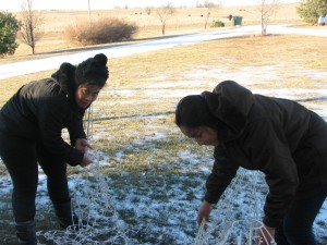 Srs. Julie and Karsy Putting up Christmas Decorations